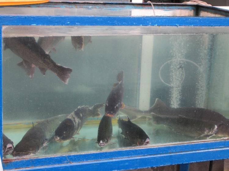 Armenian Ishkhan (trout) fish